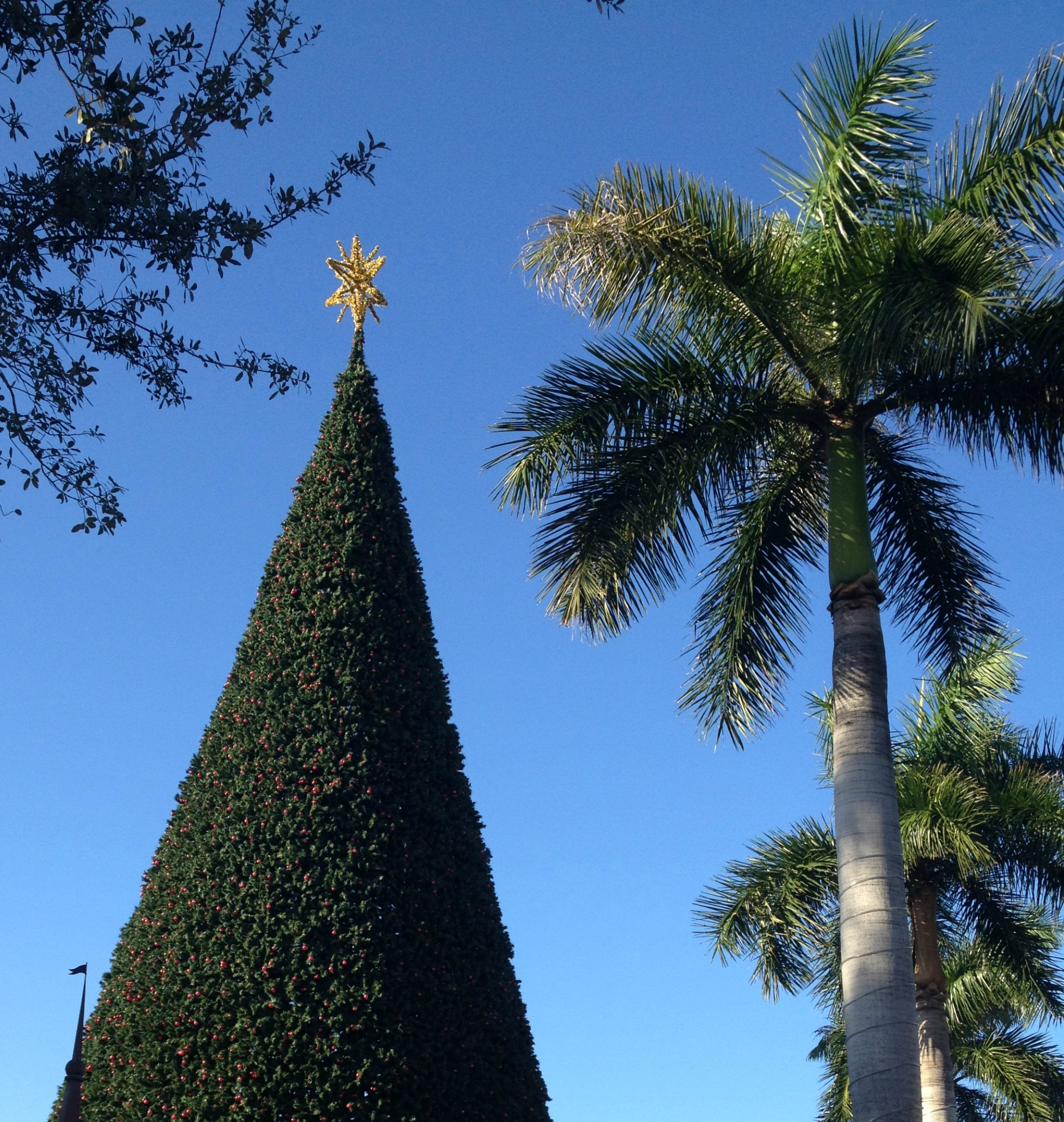 The Prettiest Christmas Tree In The World: Christmas Tree Lighting In Delray, 100-Foot Christmas Tree