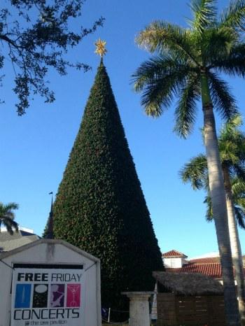 100 foot tree in delray