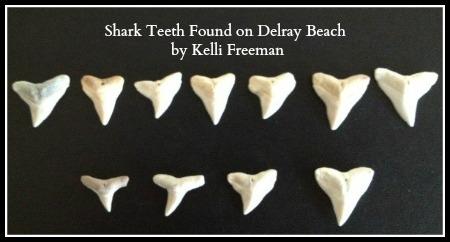 shark teeth collection